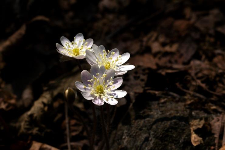 nature-3264380_1920.jpg